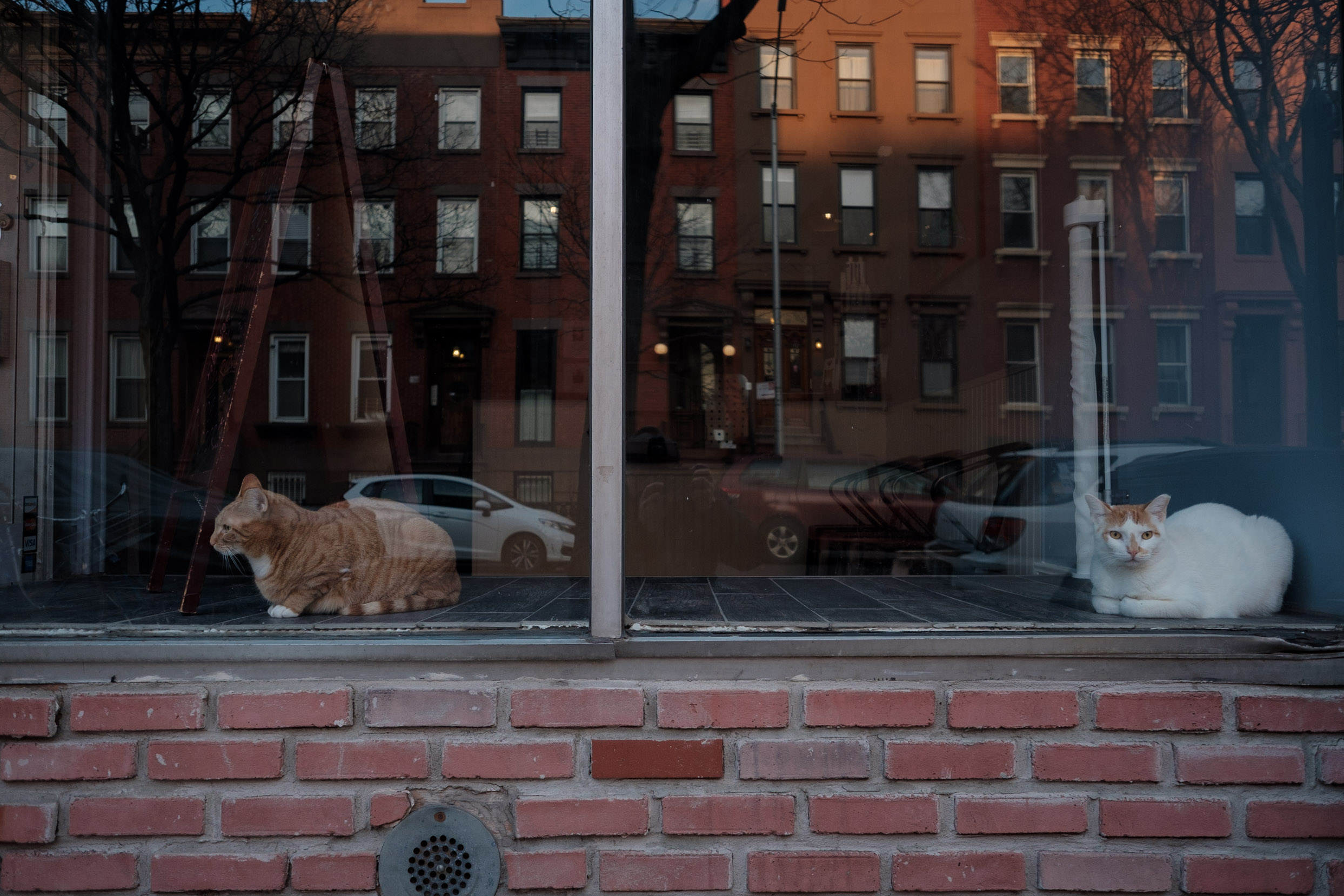 cats-in-storefront-carroll-gardens-brooklyn-color-photography